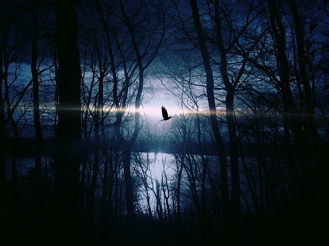 bird-383245_640